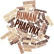 ������, ������: Word cloud for Human pharynx
