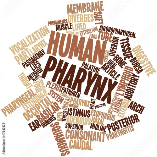 Word cloud for Human pharynx