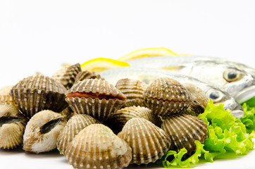 Fresh raw clams