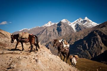 caravan of horses