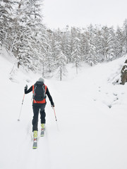 Backcountry skier walks in a snowy mountain forest