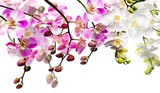 Bouquet of orchids (white and light pink) isloated on white - 47395443