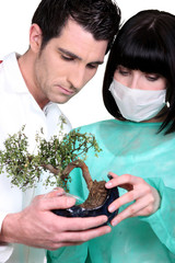 Doctors with a bonsai tree