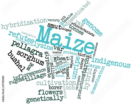 Word cloud for Maize