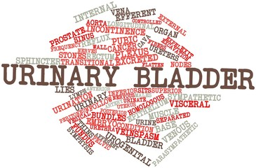 Word cloud for Urinary bladder