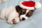 the puppy sleeps in a New Year's cap