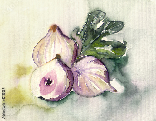 Figs © Heidrun Gellrich