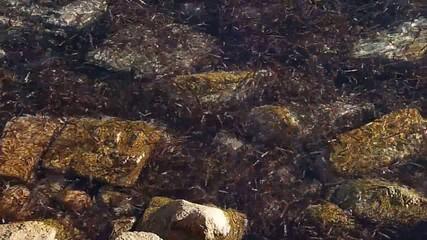 movimento d'alghe tra gli scogli di la maddalena 5
