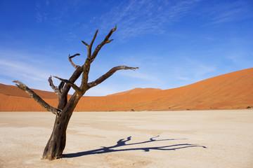 Amazing dead trees in beautiful desert.