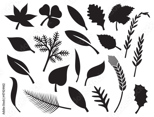 vector collection of leaf silhouettes - collection leaves