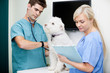 Veterinarian Doctor Examining Dog With Female Nurse At Clinic