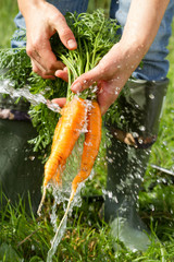 Washing carrots under water