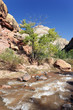 rapids of the Virgin River