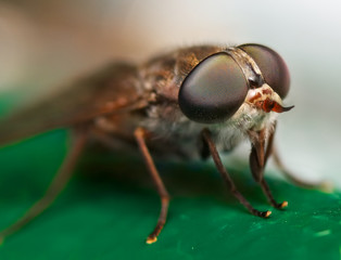a horse fly sitting on a green surface