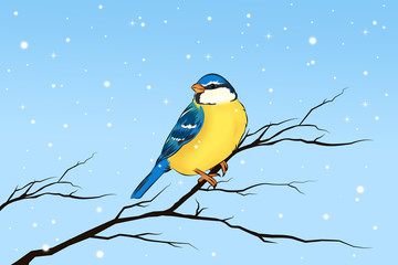 Blaumeise Meise Vogel im Winter