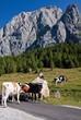 Monte Peralba Sorgenti del Piave, Friuli