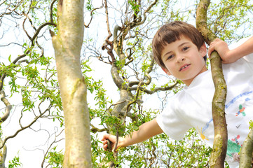 Boy in a tree looks into the camera