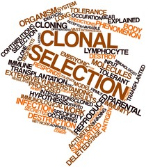 Word cloud for Clonal selection