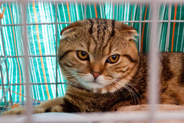 cat in a cage