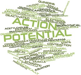 Word cloud for Action potential