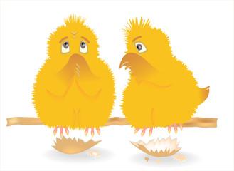 Цыплята на жердочке
