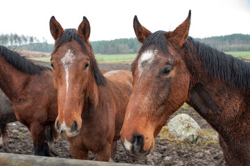 Young horses enduring their first November