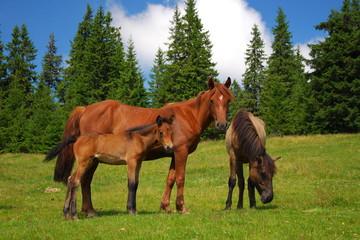 Лошади на поляне