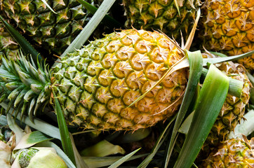 Pineapple fruit.