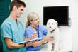 Veterinarian Doctors Examining A Dog At Clinic