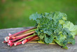 bunch of rhubarb on wooden table