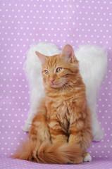 Gatto  con  espressione angelica