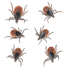 Tick collection isolated on white background