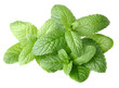 Fresh mint on a white background
