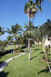 Coconut palms and vacation condominiums