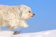 Schneller Hund