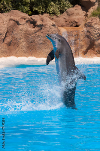 Dolphins Dolphin