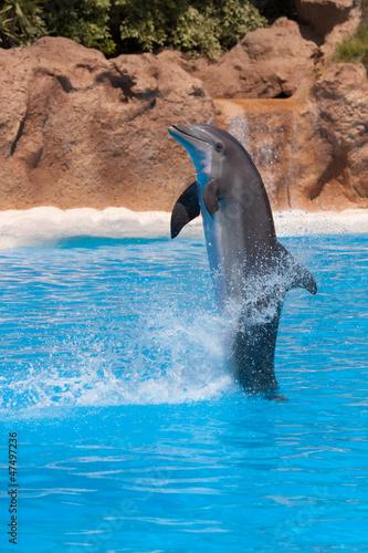 Fotobehang Dolfijnen Dolphin