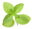 isolated eight green mint leaves