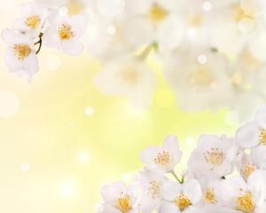 jasmine flowers corner on light background
