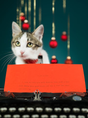wishes of a cat for christmas