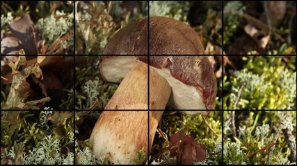 mushrooms and berries montage