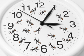 Toy Ants on Clock