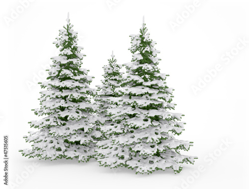 Snow covered christmas trees on white background