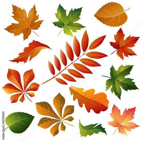 Collection beautiful colorful autumn leaves isolated on white