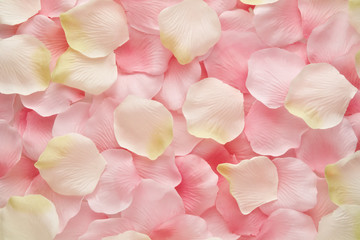 Soft pink and white rose petals