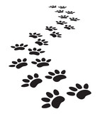 Fototapety animal paw prints