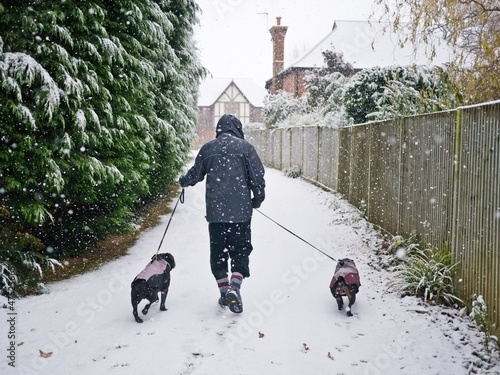 Walking the dogs in the snow