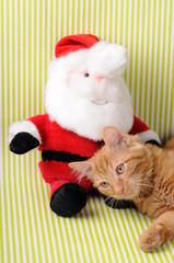 Gatto rosso con Babbo Natale