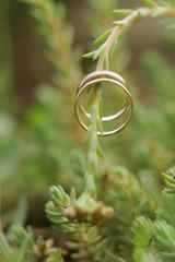 Wedding Rings on Plant