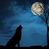 Fototapeta księżyc - złota - Dziki Ssak